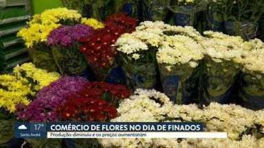 Produção de flores diminui e preços sobem para o Dia de Finados - As flores precisam ser plantadas com grande antecedência, quando os cemitérios ainda estavam fechados. Rosas, lírios e crisântemos subiram cerca de 50, 60%.