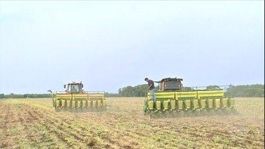 Após atraso causado pela falta de chuva, agricultores de MS correm com o plantio da soja - Apesar disso, expectativa é que a safra no estado seja 2,3% maior.