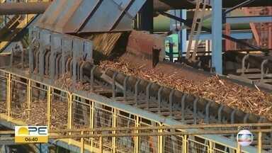 Colheita da cana-de-açúcar faz crescer geração de empregos formais em Pernambuco - Safra deve envolver 70 mil pessoas de forma direta, segundo Sindaçúcar.