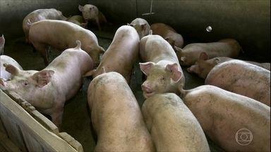 Alta no preço da ração faz subir os custos de criadores de frango e porco - Soja e milho estão em preços recordes no mercado, pesando – e muito – no gasto com a alimentação dos animais, o principal da atividade.