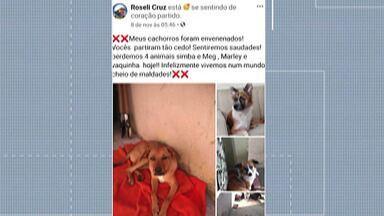 Cachorros são encontrados mortos com sinais de envenenamento em Poá - O crime aconteceu nesta terça-feira (10), no Jardim Obelisco. O caso está sendo investigado pela Polícia Civil.