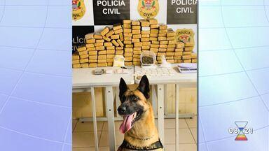 Polícia Civil apreendeu 82kg de maconha em Jacareí - Confira as informações.