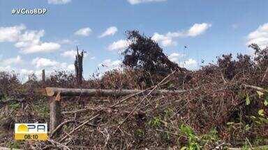 Quinta fase da operação Amazônia Viva fecha 31 garimpos em 15 dias de atuação - Quinta fase da operação Amazônia Viva fecha 31 garimpos em 15 dias de atuação.