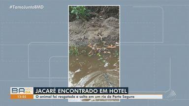 Jacaré-de-papo-amarelo é encontrado dentro de hotel, na cidade de Porto Seguro - Animal foi resgatado e solto em um rio da região.