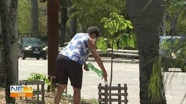 Dona de casa compartilha paixão por plantas com a comunidade em que vive, em Santo Amaro - Gosto pela jardinagem começou na infância, segundo Dona Aurinha.