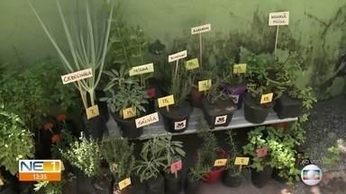 Cultivo de plantas vira atividade terapêutica para empreendedora durante isolamento social - Proximidade com a natureza trouxe mais tranquilidade para a rotina de Karina Cestaro.