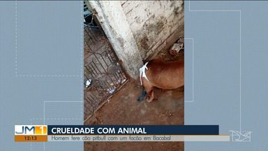 Morador de Bacabal foi preso, após atacar com um facão um cão da raça Pitbull - O animal é de uma vizinha do agressor.