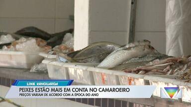 Peixes estão mais em conta no camaroeiro - Preços variam de acordo com a época do ano.