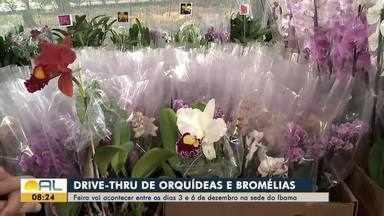 Feira de orquídeas e bromélias acontece em Maceió a partir desta quinta-feira - Evento vai ser na sede do Ibama.