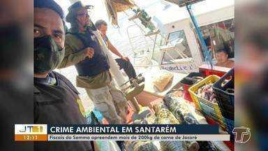 Cerca de 200kg de carne de jacaré é apreendida e incinerada em Santarém - Incineração aconteceu nesta quinta-feira (3).