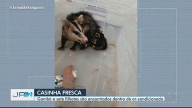 Gambá dá a luz a sete filhotes em ar condicionado do prédio da Guarda Civil, em Goiânia - Família deu trabalho para ser retirada.