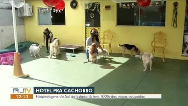 Hotéis para cachorros já têm 100% das vagas ocupadas no Sul do Rio - Mercado é movimentado por famílias que viajam neste fim de ano. Abandono de animais cresce em torno de 30% nesta época.