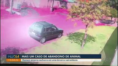 Homem abandona cachorro em uma árvore em Cascavel - Uma família adotou o cãozinho que agora se chama Barti.