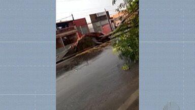 Chuva derruba árvore em Mogi das Cruzes - Ela ficou caída na Avenida Francisco Ferreira Lopes no Distrito de Brás Cubas.