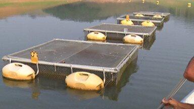 Chuva melhora situação na Represa Jaguari em Santa Isabel - Pescadores que trabalham no reservatório já estão com criação de novos peixes por lá.