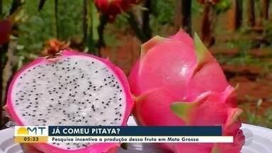 Pesquisa incentiva a produção de pitaya em Mato Grosso - Pesquisa incentiva a produção de pitaya em Mato Grosso
