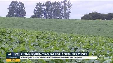 Produtores relatam prejuízos por causa da seca no Oeste de SC - Produtores relatam prejuízos por causa da seca no Oeste de SC
