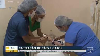 Castramóvel reduz atendimentos por causa da pandemia em Santarém - Saiba mais sobre a redução dos atendimentos.