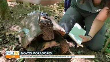 Doze jabutis-tinga são soltos no Parque Nacional da Tijuca - Animais vão ser monitorados por pesquisadores.