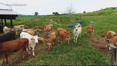 Confira os destaques do Jornal do Campo - Reportagem fala sobre a produção artesanal de queijos.