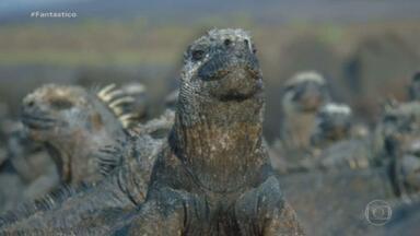 Bichos espiões: iguana robô mostra como vivem as 'colegas' no arquipélago de Galápagos - Novo episódio da série mostra também agente secreto infiltrado em uma operação bem refrescante na Amazônia.