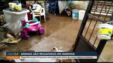 Depois de denúncia, animais são resgatados em Maringá - Dona do imóvel foi presa e autuada pelo crime de maus-tratos a animais.