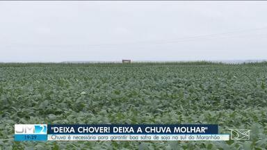 Agricultores aguardam a chuva na reta final do plantio de soja no sul do Maranhão - A região está sendo afetada por curtos períodos de estiagem.