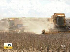 Agricultores no Sul do MA esperam pela chuva para plantio da soja - Região está sendo afetada por curtos períodos de estiagem, que podem reduzir o rendimento das lavouras.