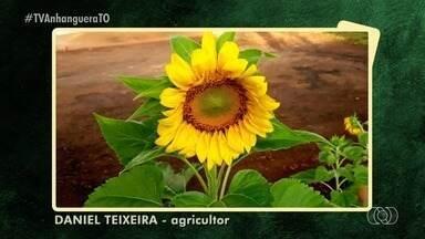 Agricultor mostra cultivo particular de flores e árvores; confira - Agricultor mostra cultivo particular de flores e árvores; confira