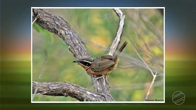 Biodiversidade e preservação da sera do amolar - Biodiversidade e preservação da sera do amolar