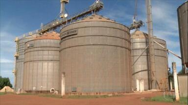 Preço alto do milho encarece alimentação animal em Goiás - Situação preocupa, por exemplo, o pecuarista Nei Bridi, de Jataí, que tem 180 cabeças de gado que produzem leite. Por dia, cada animal consome, em média, 7 quilos de ração à base de milho.