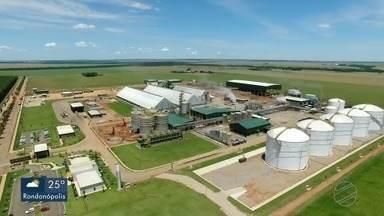 Empresários de MT querem levar experiência com a produção de biocombustível para a Europa - Empresários de MT querem levar experiência com a produção de biocombustível para a Europa