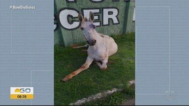 Cavalo é abandonado no Setor Grande Retiro, em Goiânia - Morador faz vídeo mostrando animal deitado e ferido na Rua GR-8.