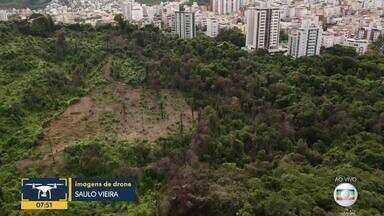 Após incêndio, natureza se recupera em parque no bairro Castelo, em BH - Vegetação já começou a crescer na área queimada.