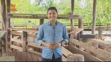 Reveja a íntegra do Amapá Rural deste domingo 28/02/2021 - Reveja a íntegra do Amapá Rural deste domingo 28/02/2021