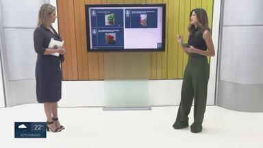 Conexão Verde tira dúvidas e visita casa de telespectadora - Bióloga fala sobre orquídea e dona de casa mostra quintal feito na pandemia.