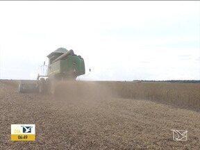 Conab espera aumento na safra de grãos no Sul do Maranhão - Apesar da instabilidade no clima com estiagem no plantio e chuva na colheita a Companhia Nacional de Abastecimento (Conab) ainda espera crescimento na produção de grãos.