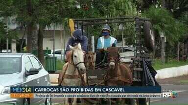 Carroças são proibidas em Cascavel - Projeto de lei impede o uso de qualquer tipo de veículo puxado por animais na área urbana.