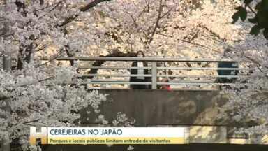 Parques e locais públicos limitam entrada de visitantes, no Japão - Apesar de medidas restritivas impostas no Japão, alguns parques e áreas públicas tem recebido muita gente para a observação das cerejeiras. O policiamento foi reforçado em alguns lugares para evitar aglomeração.