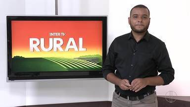 Confira íntegra da edição do Inter TV Rural deste domingo, 28 de março - Programa mostra as curiosidades do campo, condições do mercado e as mais diferentes experiências de quem decide viver da terra ou do mar.