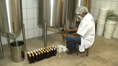 Setor de apicultura cresce em Alagoas - Produtores aproveitaram financiamentos para ampliar a atividade.