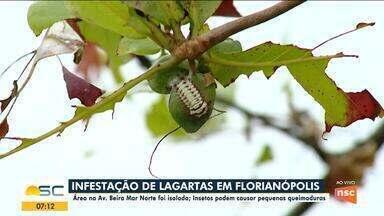 Área na Avenida Beira-mar Norte, em Florianópolis, é isolada por conta das lagartas - Área na Avenida Beira-mar Norte, em Florianópolis, é isolada por conta das lagartas