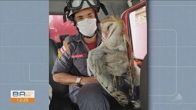 Coruja de grande porte é resgatada pelo Corpo de Bombeiros em Jequié - Animal ficou preso numa linha de pipa e moradores chamaram os bombeiros.