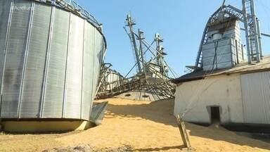 Silo desaba e agricultores têm prejuízo de 18 mil sacas de milho que estavam estocadas - Silo desaba e agricultores têm prejuízo de 18 mil sacas de milho que estavam estocadas