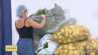 Pandemia dificulta trabalho de pequenos produtores de verduras e hortaliças - Pandemia dificulta trabalho de pequenos produtores de verduras e hortaliças.