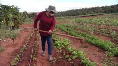 No Dia das Mães, conheça histórias de mulheres que se dedicam ao campo e à família - Inter TV Rural conta um pouco mais sobre a vida de Maria Aparecida e Maria Helena.
