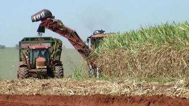 Safra da cana de açúcar deve ter redução neste ano - Chuva abaixo da média vai comprometer produção.