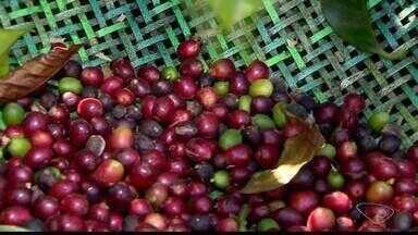 Cafeicultura das montanhas do ES recebem registro de Identificação Geográfica - Assista.