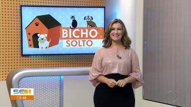 Donos procuram por animais desaparecidos no quadro 'Bicho Solto' - Donos procuram por animais desaparecidos no quadro 'Bicho Solto'.