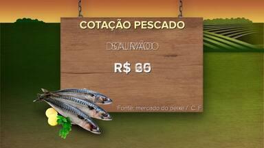 Confira a cotação do pescado neste domingo (09) - InterTV Rural traz informações sobre a cotação do pescado.